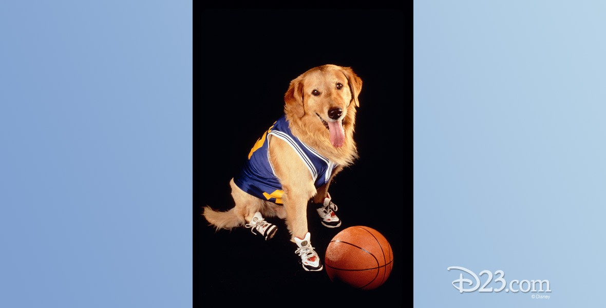 photo of golden retriever in basketball shoes and jersey with a basketball