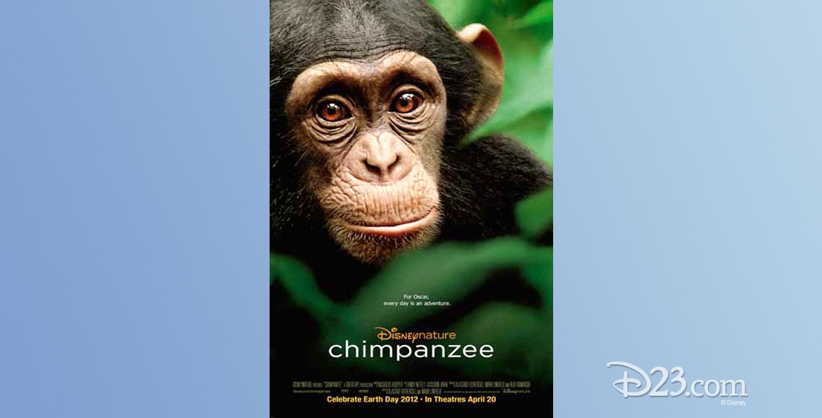 poster for documentary Chimpanzee