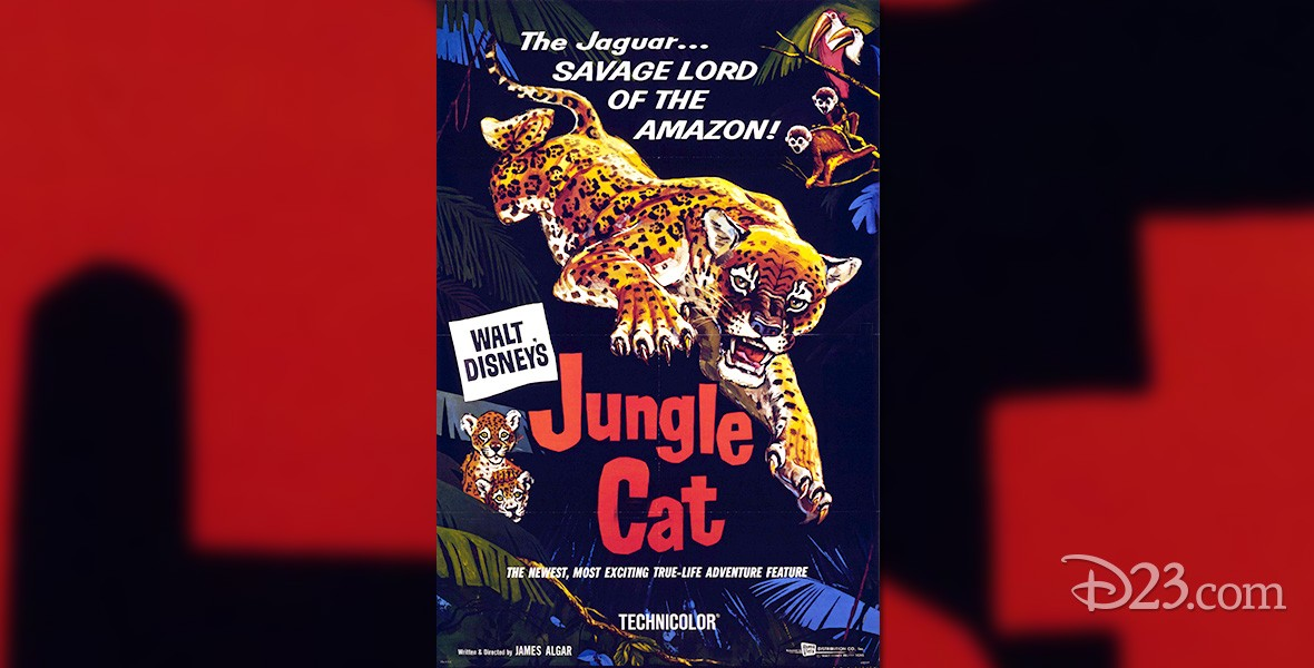 one-sheet movie poster for Jungle Cat