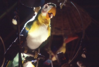 photo of bright green, yellow, and cream colored parrot
