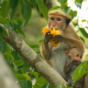 photo of two Monkeys Eating in Tree