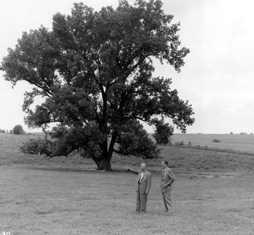 photo of Roy and Walt in a field under a large cottonwood tree