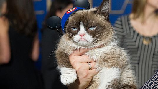 Grumpy Cat at the Cinderella Premiere