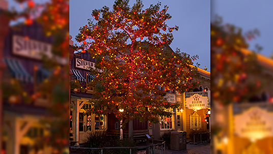 During Halloween Time, the Halloween Tree is decked out with glowing lights and hand-painted jack o' lanterns.