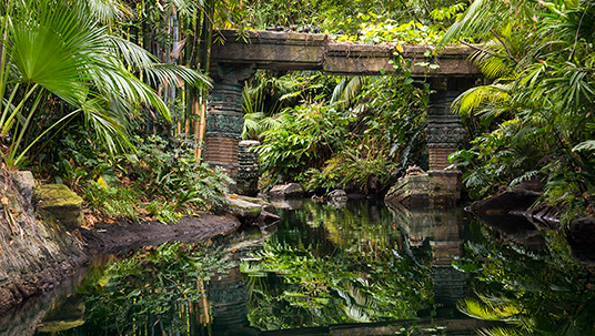 The forest canopy in Jungle Cruise.