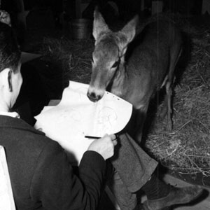 Walt Disney Studio Animators using a live deer to create drawings for animation