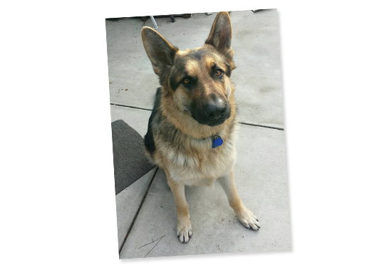 060915_fan-rescue-dogs-feat-3