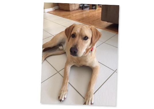 060915_fan-rescue-dogs-feat-5