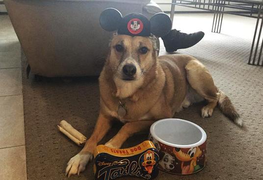 060915_fan-rescue-dogs-feat-9
