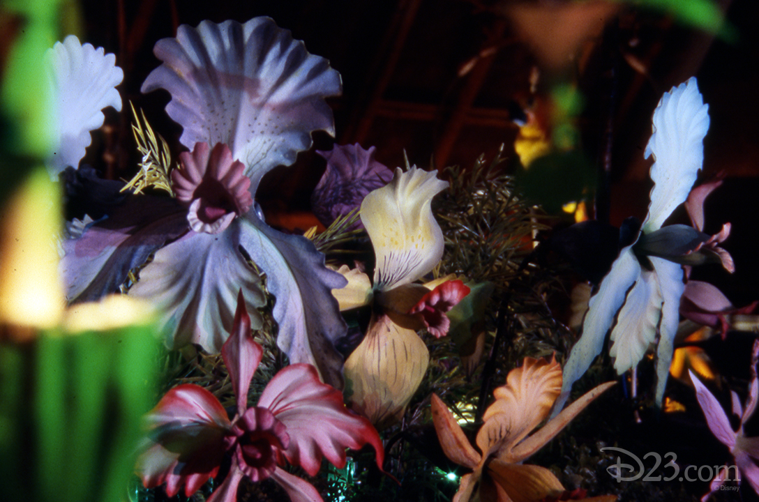 photo of talking orchids at the enchanted tiki room