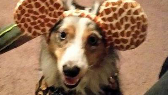 D23 Member Dog Eros