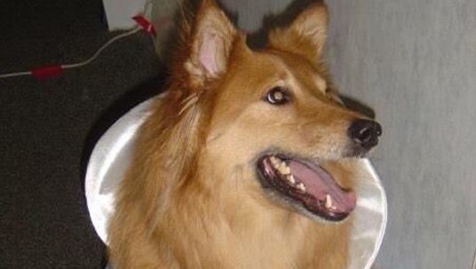 D23 Member Dog Rascal