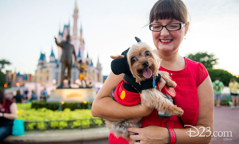 A Yorkie dressed as Mickey Mouse poses with his owner.