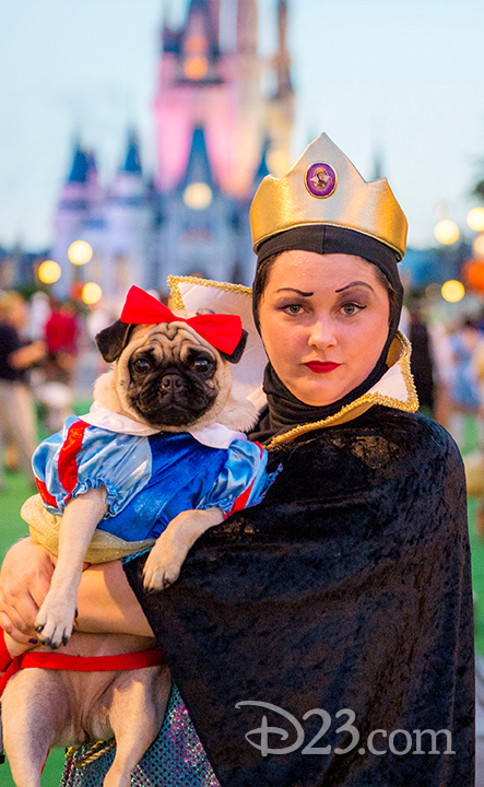 A Snow White pug poses with her owner on the green carpet.