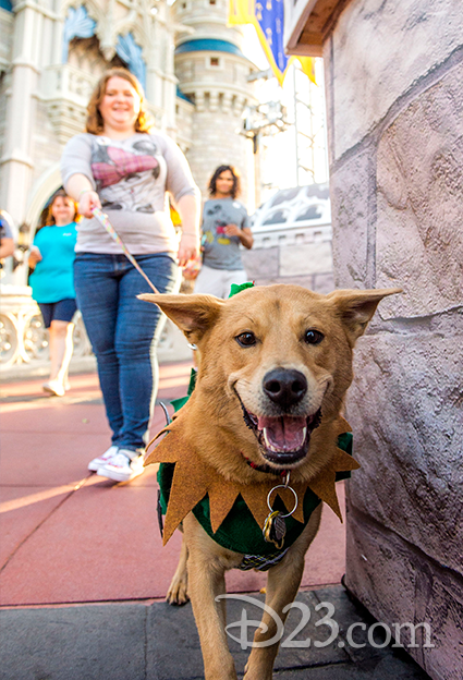 A pup dressed as Robin Hood joins his owner on a walk through Magic Kingdom.