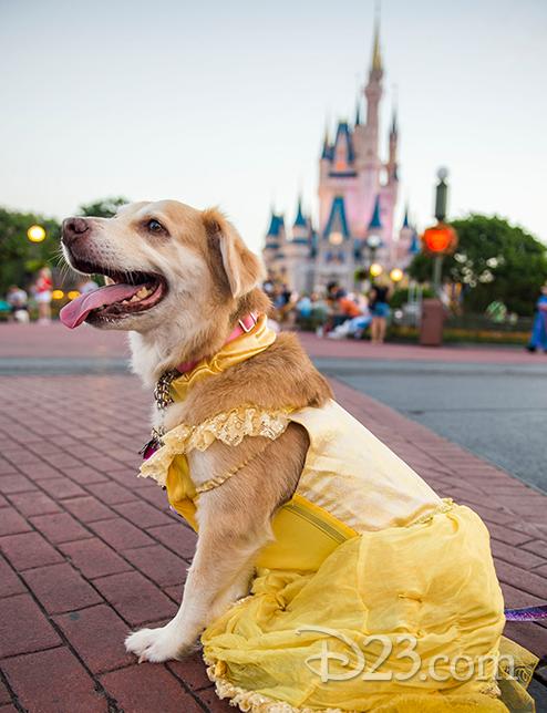 A pup dressed as Disney Princess Belle poses on Main Street, U.S.A.