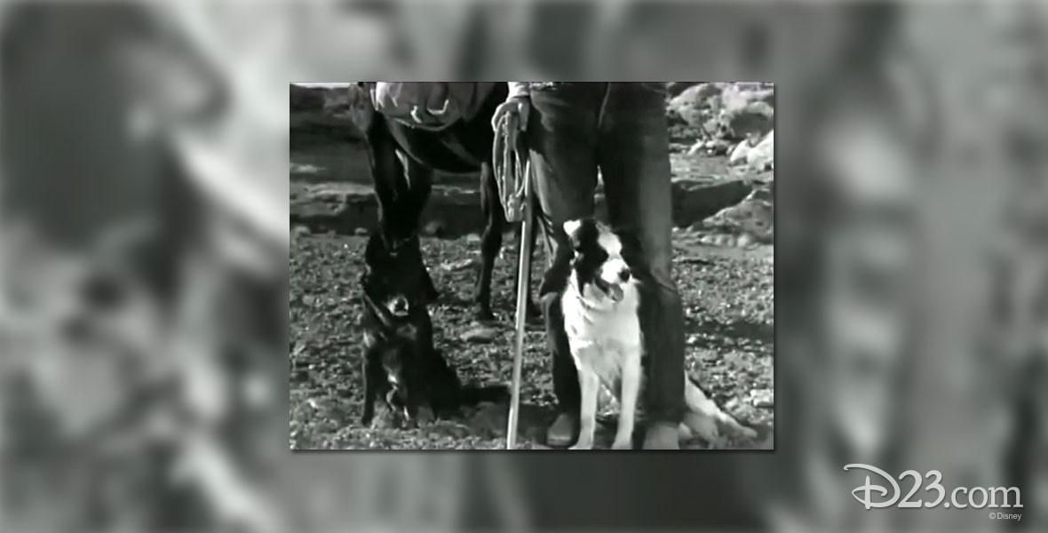 Arizona Sheepdog Featurette