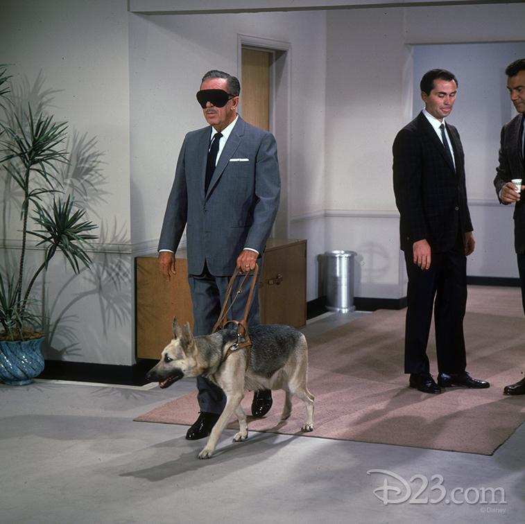 walt-files-seeing-eye-dogfeat-feat-2.1