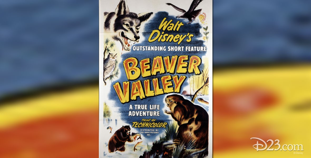 In Beaver Valley Disney True Life Adventure Short Feature