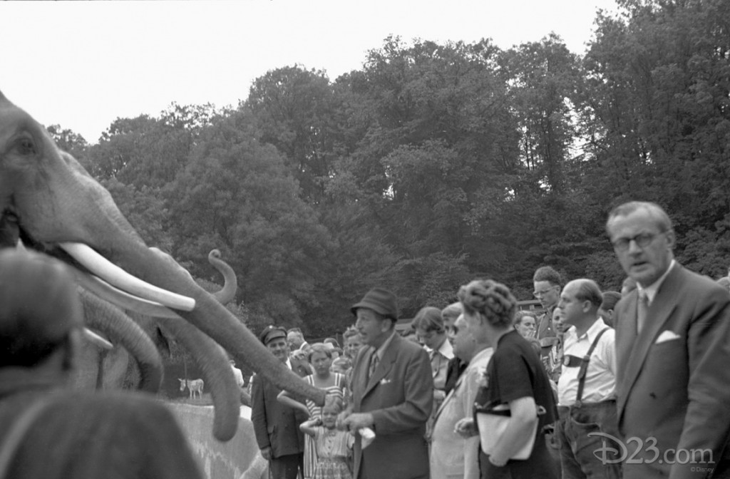 We believe this shot was taken at the Berlin Zoo, during Walt's trip in 1958.