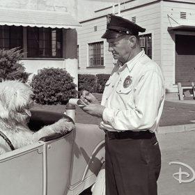 Dog gets ticket at the Walt Disney Studios