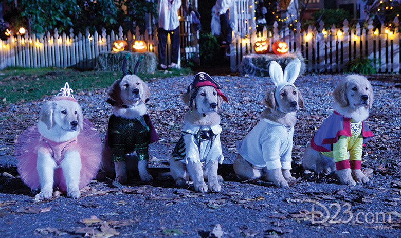 Spooky Dogs