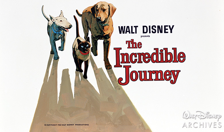 Did You Know? 8 Incredible Facts About Homeward Bound: The