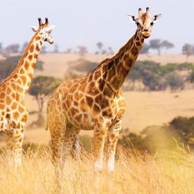 Adventures by Disney Africa Safari