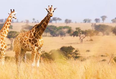 ABD Safari