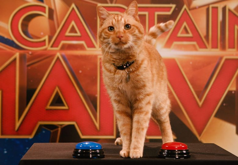 Captain Marvel's Goose the Cat Reveals His Disney Cat Favorites | Disney This or Cat