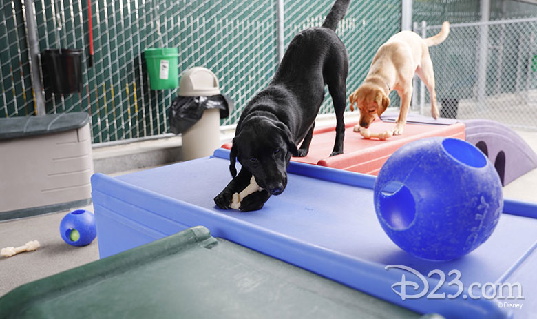 pick of the litter disney plus dogs