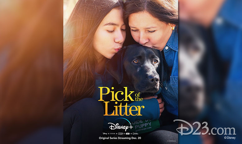 pick of the litter disney plus cover art