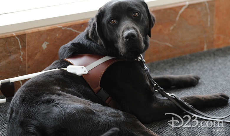pick of the litter disney plus dog
