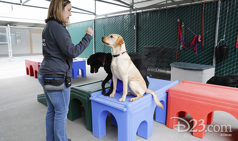pick of the litter disney plus dogs being trained