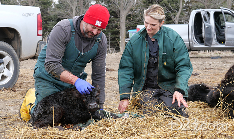 Heartland Docs, DVM and Critter Fixers: Country Vets