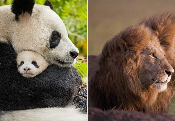Enjoy Discounted Disneynature Films For a Limited Time
