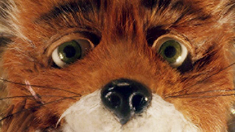 Fantastic Foxes D23