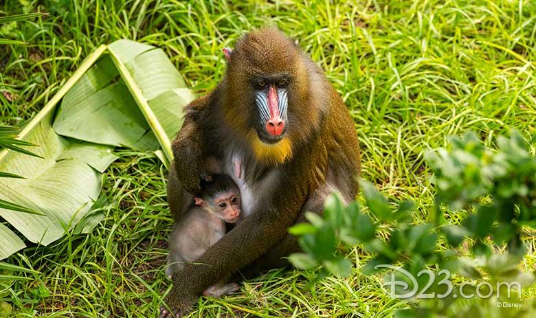 Baby Animal at DAK