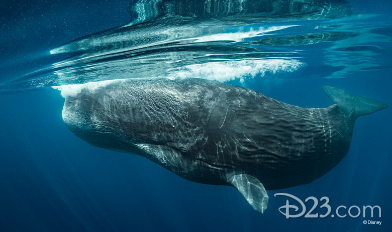 Secrets of the Whales