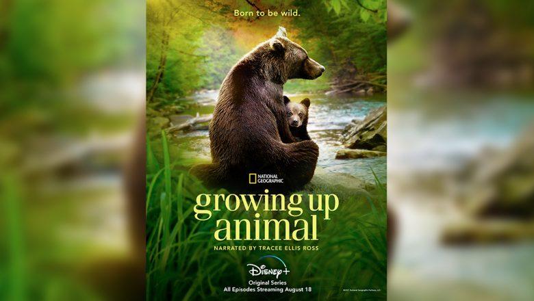 This Week's Disney News